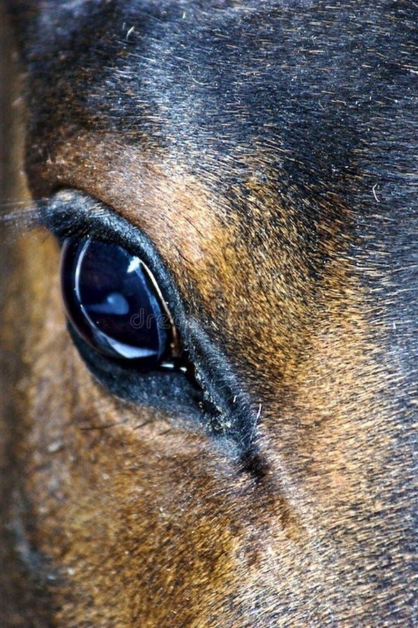 oka koni odbicie obrazy royalty free