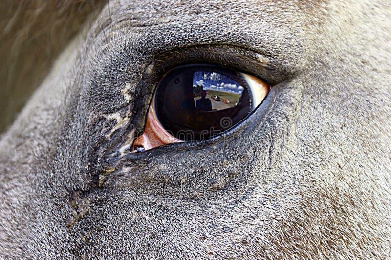 oka konia odbicie obraz royalty free