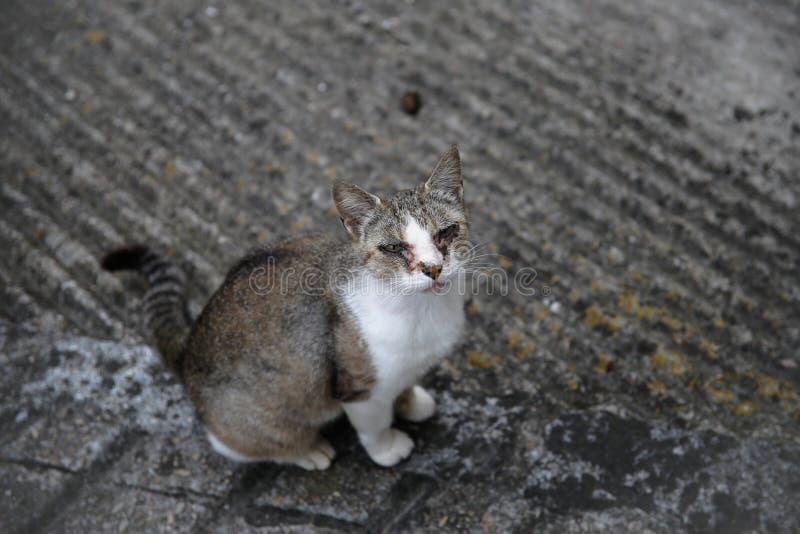 Oka rozładowanie w kotach fotografia stock