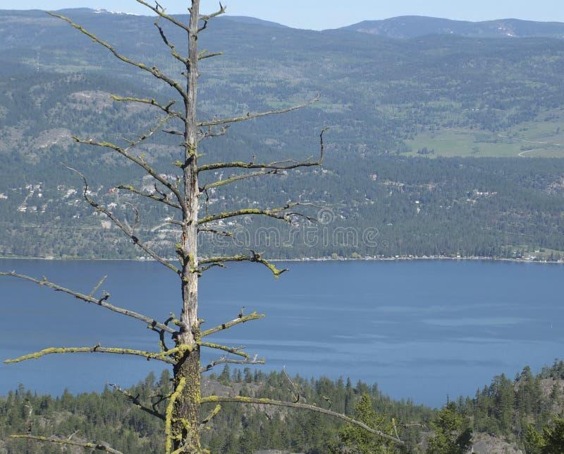 okanagan lake royaltyfria bilder