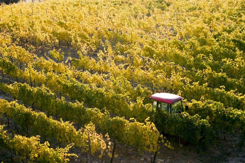 Okanagan-Tal Autumn Vineyard stockfotos