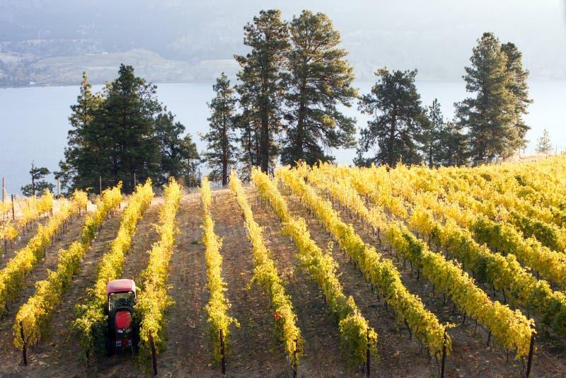 Okanagan-Tal Autumn Vineyard lizenzfreies stockfoto