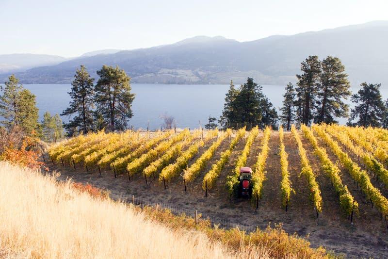 Okanagan-Tal Autumn Vineyard lizenzfreie stockbilder