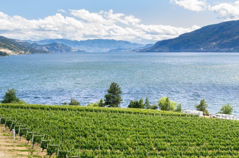 Okanagan-Tal-Weinberg an einem Frühlings-Tag lizenzfreie stockfotos