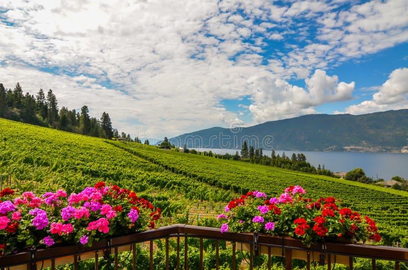 Okanagan vingård royaltyfria bilder