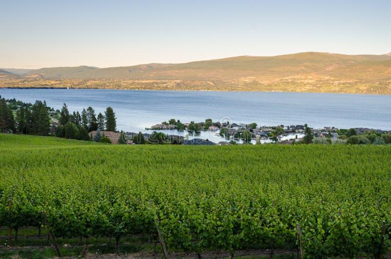 Okanaganmeer bij Zonsondergang met een Wijngaard in Voorgrond stock foto
