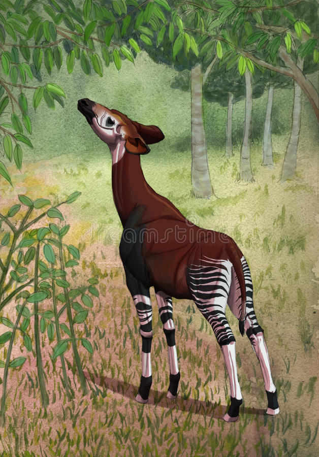 Download Okapi in forest stock illustration. Image of trees, africa - 19318724