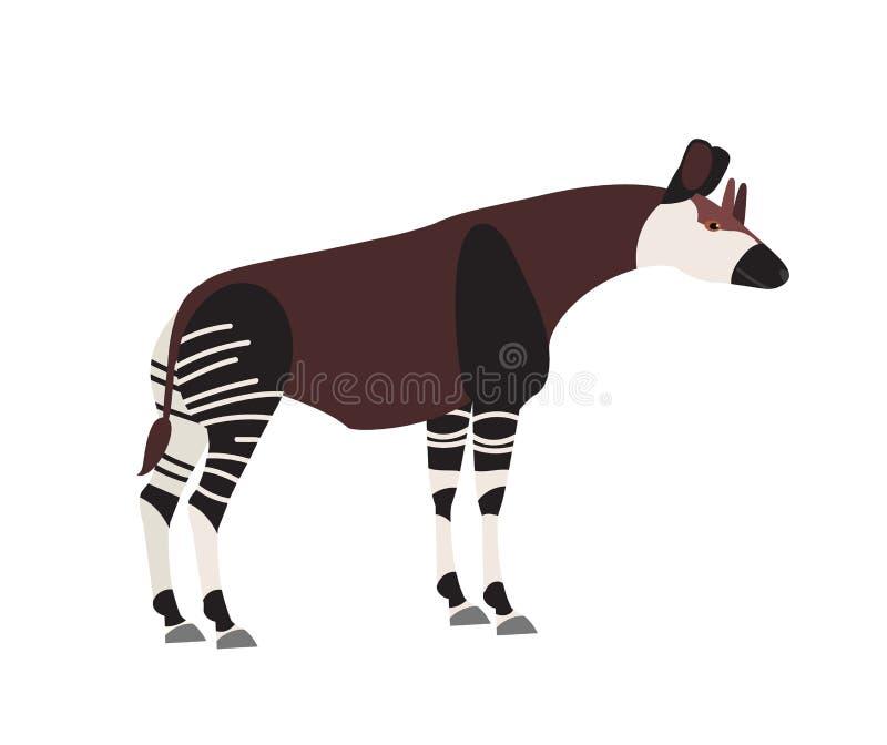 Okapi lub las żyrafa odizolowywająca na białym tle Śliczny dziki trawożerny egzotyczny Afrykański zwierzę Zagrożoni gatunki royalty ilustracja