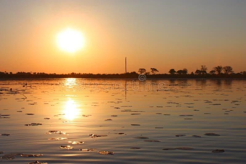 Okavango Delta fotografia royalty free