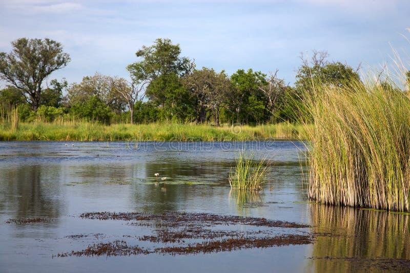 Okavango delta royaltyfri fotografi