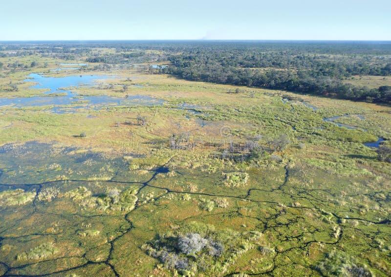 Okavango delta royaltyfri foto