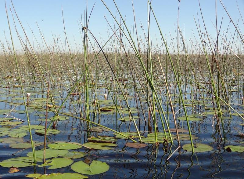 Okavango delta fotografering för bildbyråer