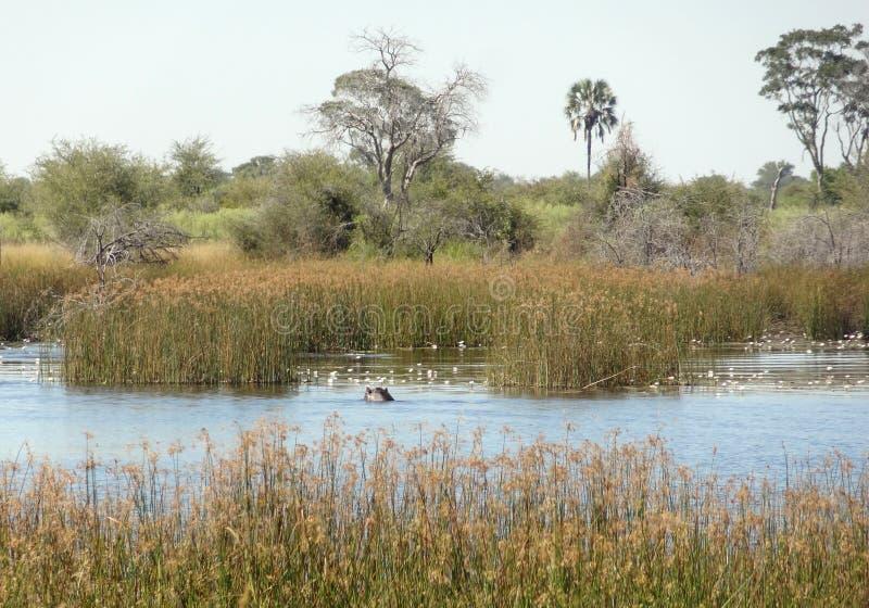 Okavango Dreieck lizenzfreies stockfoto
