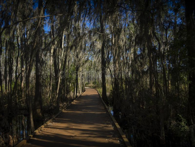 Boardwalk with tress and moss. In a park royalty free stock photo
