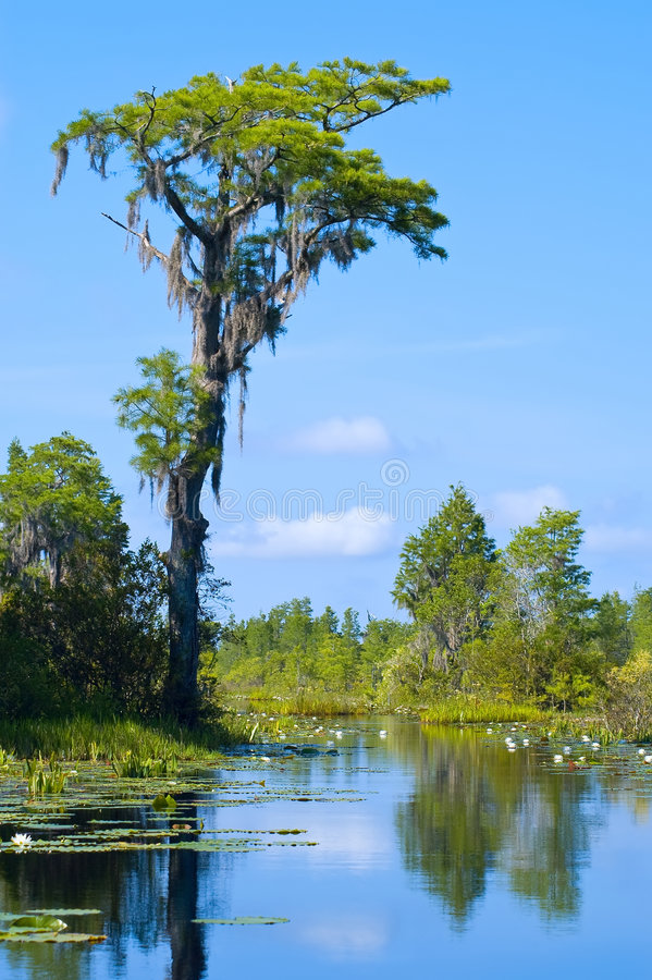 Okefenokee Swamp royalty free stock image