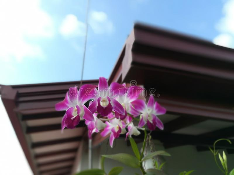 Okid blomma royaltyfria foton