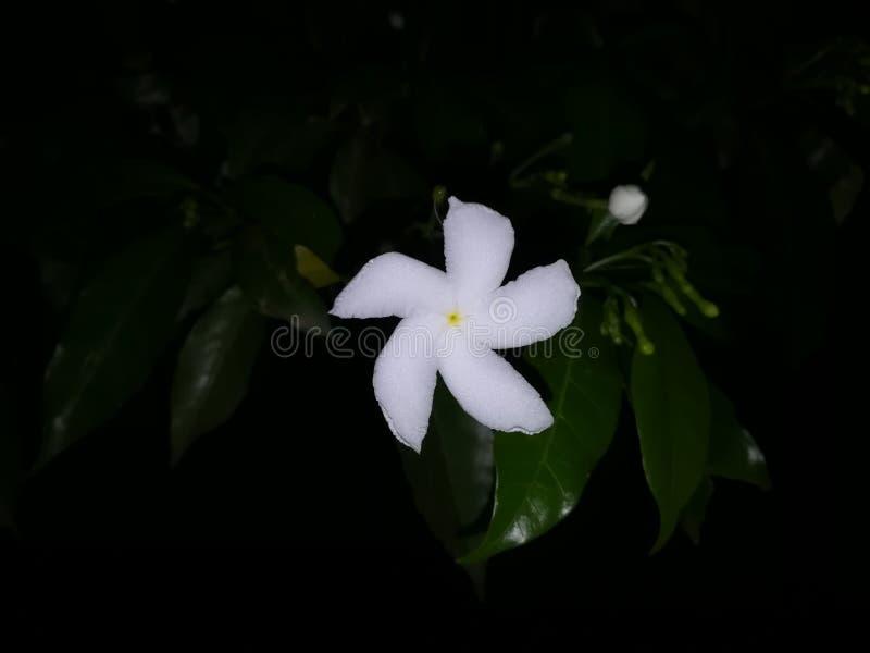 Okid flower stock photography