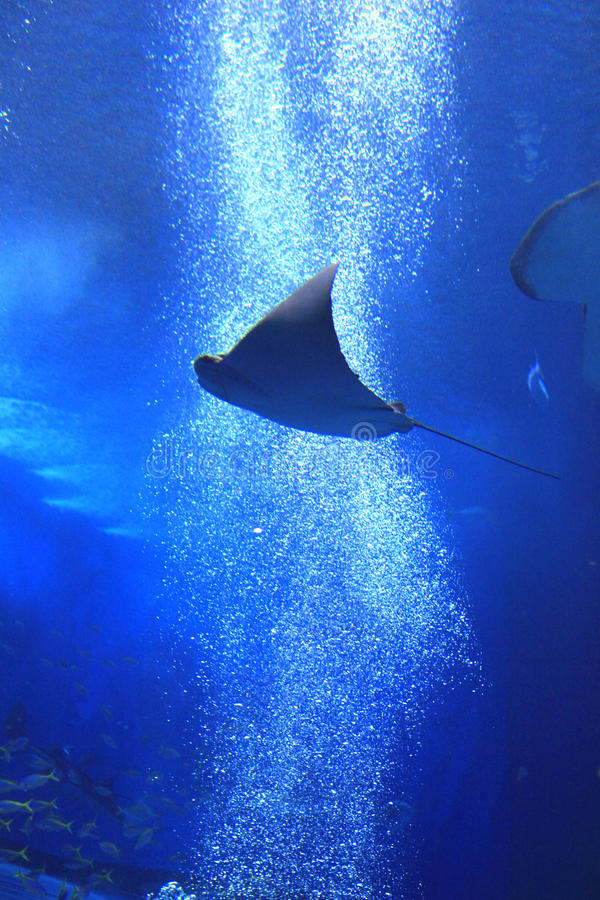 Okinawa-Aquarium lizenzfreies stockfoto