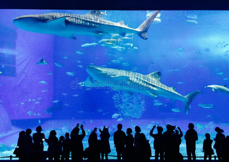 Okinawa Aquarium fotografia stock libera da diritti
