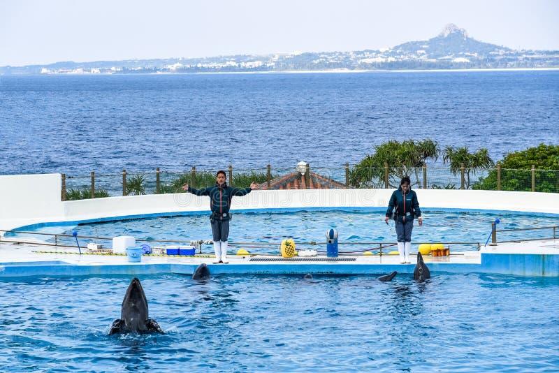 Okinawa JAPÓN - 13 de febrero de 2016: Demostración del delfín y de la ballena de Okinawa Churaumi Aquarium en Japón fotografía de archivo