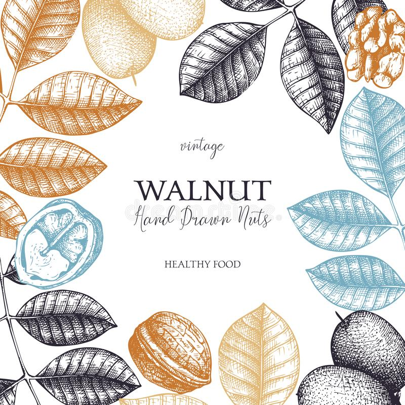 Okkernoot botanische illustratie Uitstekende ontwerpsjabloon voor het brandmerken, vlieger, verpakking, kaarten of uitnodigingen  royalty-vrije illustratie