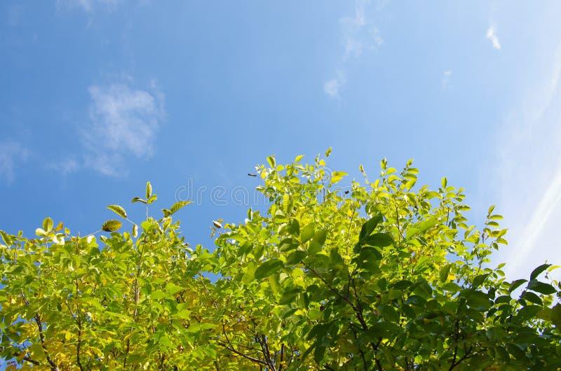 Okkernoot in de herfst stock afbeeldingen
