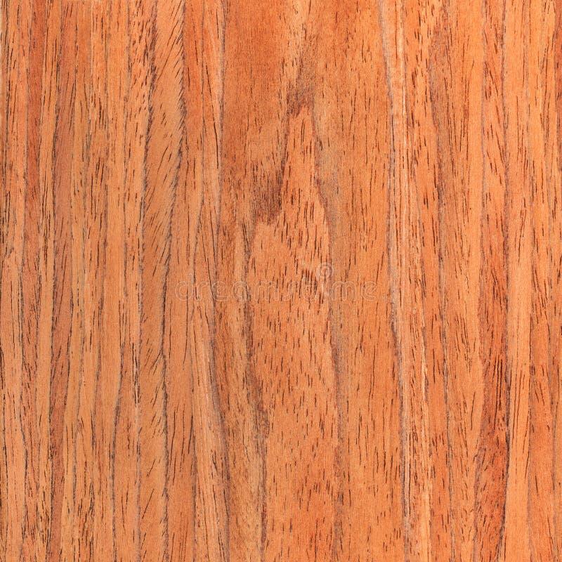 Okkernoot houten textuur, houten korrel stock afbeelding
