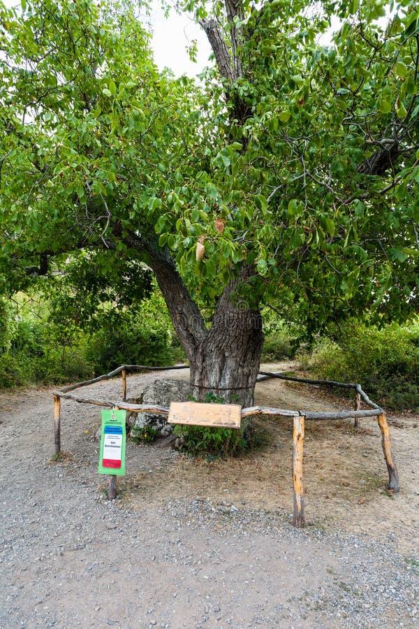Okkernootboom in natuurreservaat de Vallei van Spoken royalty-vrije stock foto's
