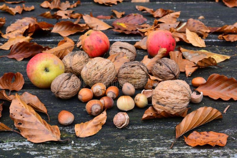 Okkernoten, hazelnoten en wilde appelen royalty-vrije stock foto's
