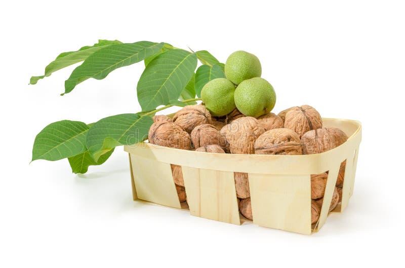 Okkernoten in houten mand en okkernoottak met onrijpe vruchten stock afbeeldingen