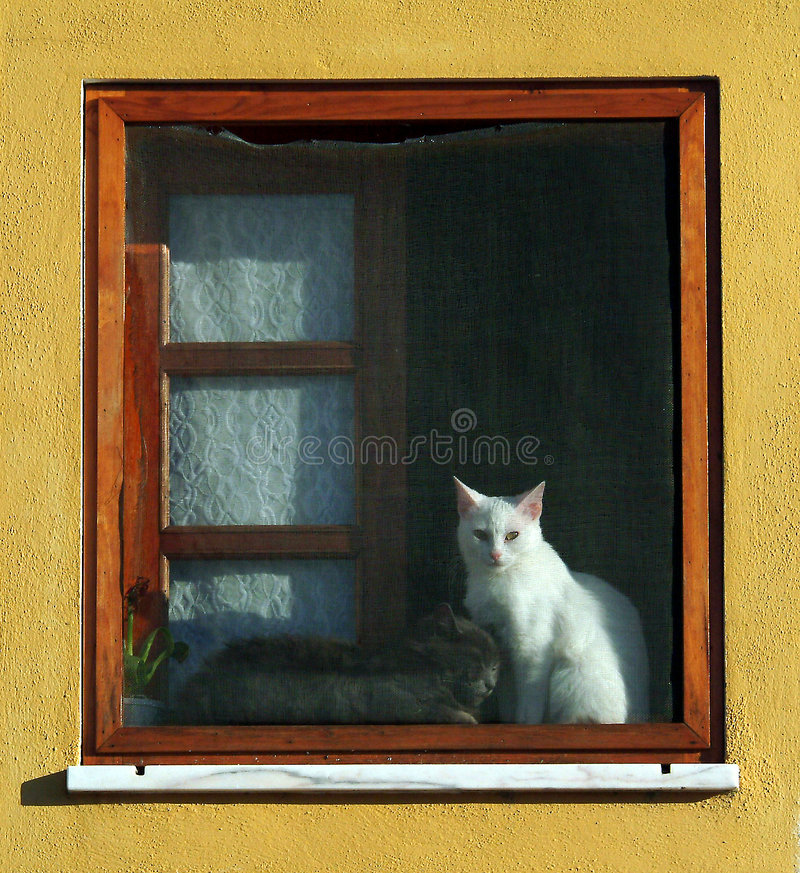 okno kota obraz stock