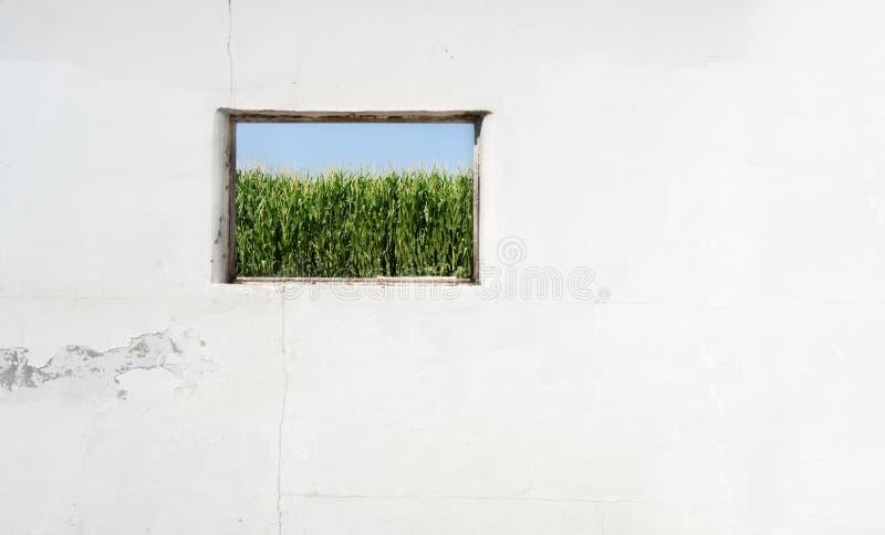 okno kukurydziany zdjęcia royalty free
