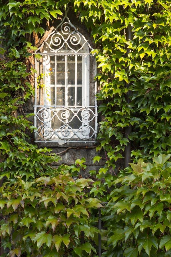 Okno przerastający bujny zieleni bluszczem obraz royalty free