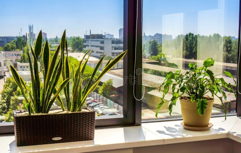 Okno z flowerpot zdjęcie stock