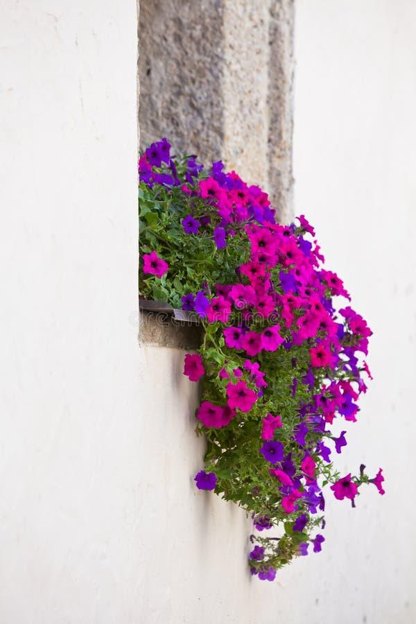 Okno z kolorowymi kwiatami na białej ścianie obraz royalty free