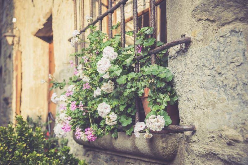 Okno z wielkimi kwiatami zdjęcie stock