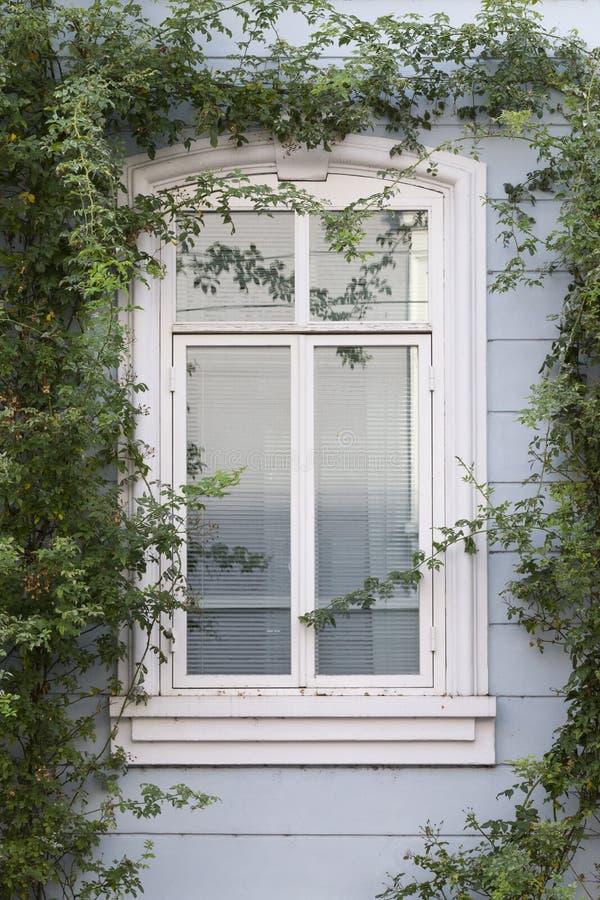 Okno z wzrastał gałąź zdjęcia royalty free