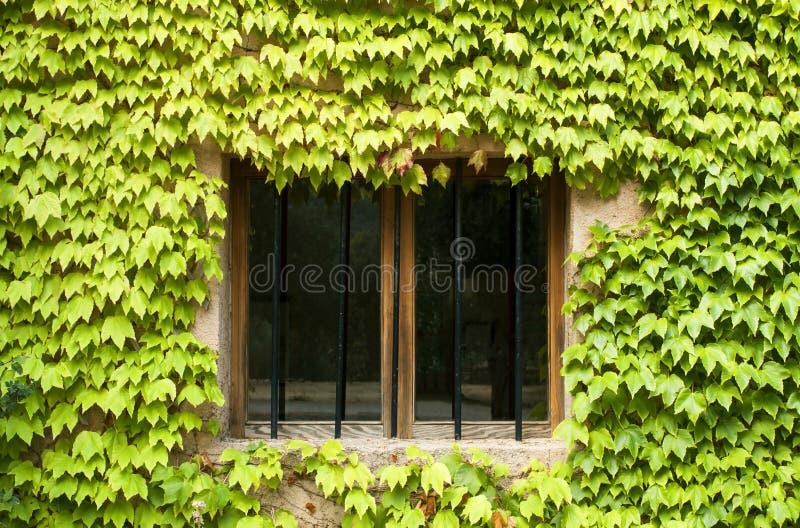 Okno zakrywający z zielonymi roślinami obraz stock