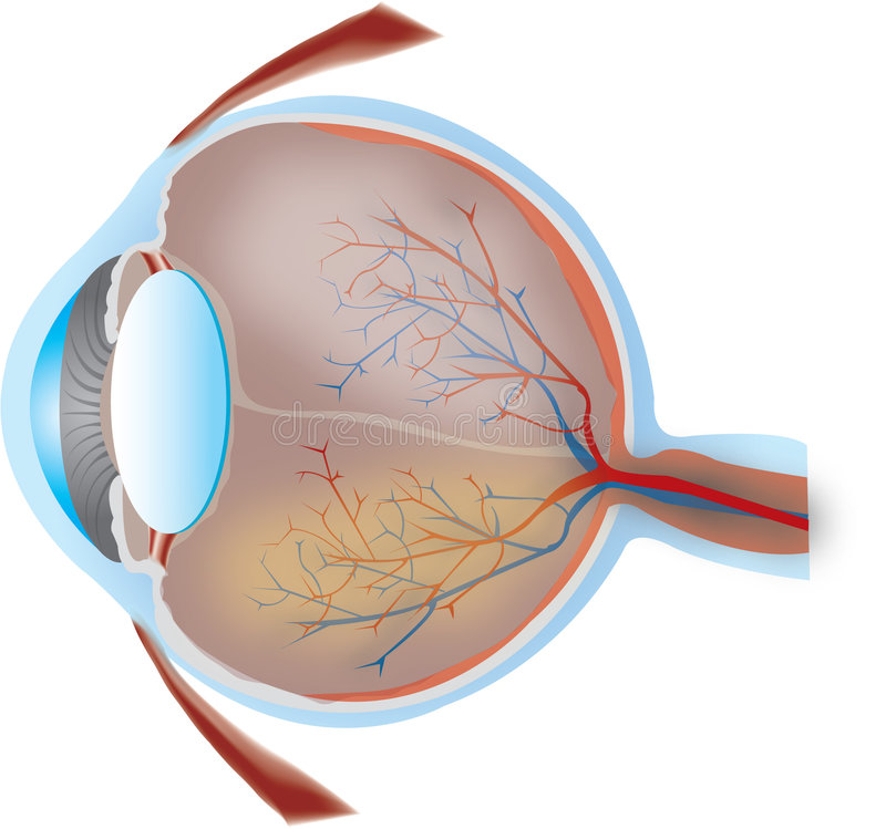 oko do środka royalty ilustracja