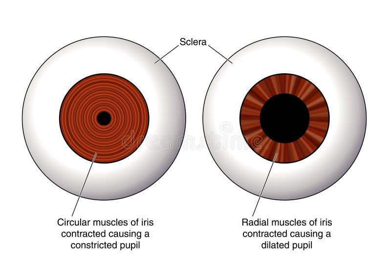 oko irys ilustracji