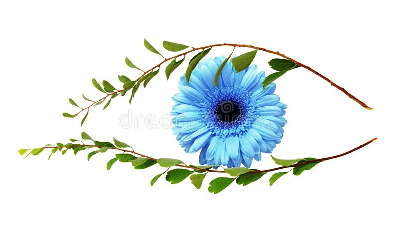 Oko natura od gałązek z małymi zieleń liśćmi i błękitnym gerber zdjęcia stock