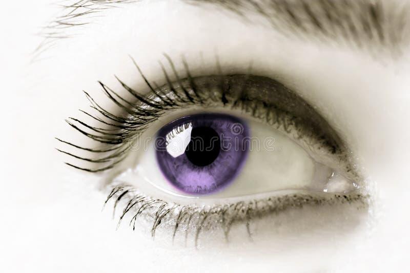oko purpurowy obrazy royalty free