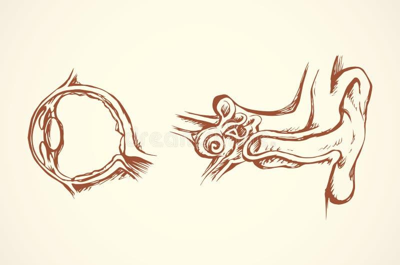Oko sekcja rysuje tła trawy kwiecistego wektora ilustracja wektor