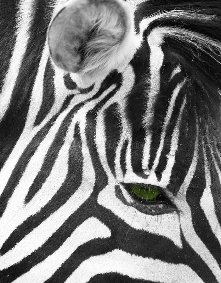Oko zebra obrazy royalty free