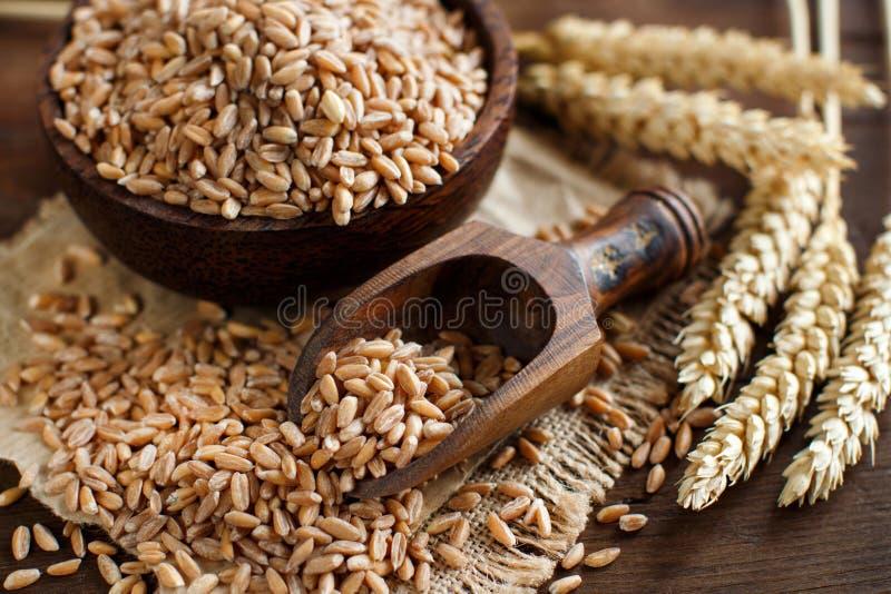 Okokt helt stavat korn i en bunke med stavade öron royaltyfri bild