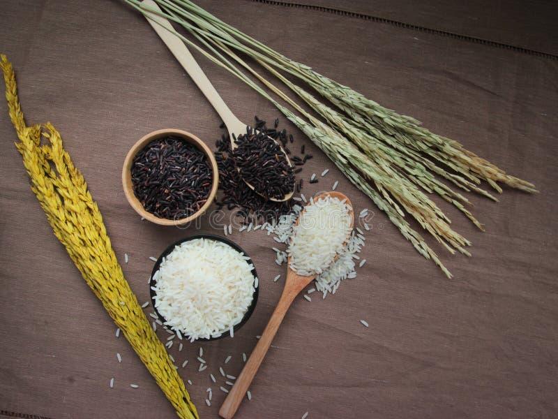 Okokta thailändska ris, vit och råriers på den träbunken och skeden fotografering för bildbyråer