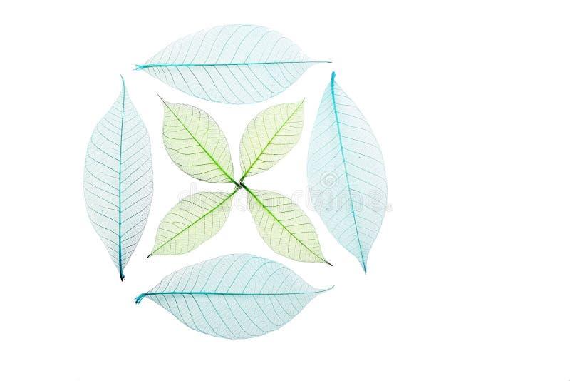 Okrąża i krzyż kośców liście na bielu zdjęcia stock