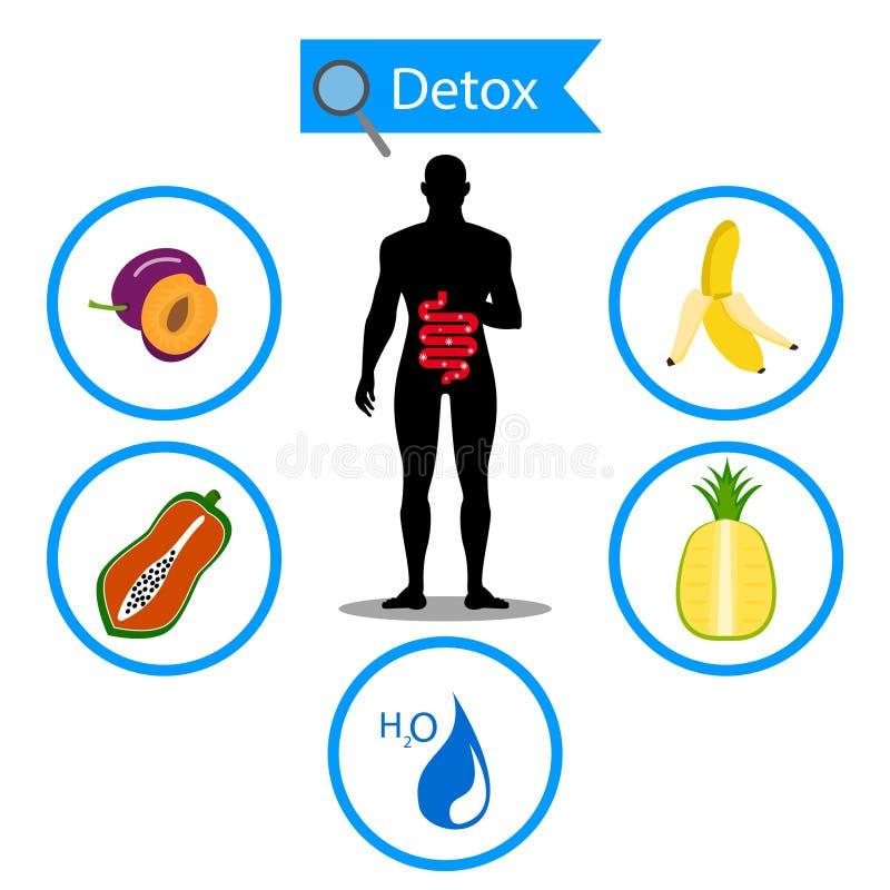 Okrężnicowy symbol na owoc i wodzie z ciałem ludzkim Foods dla czyścić twój okrężnicowego zdrowego pojęcie royalty ilustracja