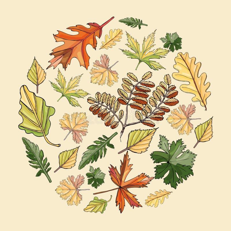 Okręgu skład z jesień koloru liśćmi różni drzewa i kwiaty na jasnożółtym tle R?ka rysuj?cy atramentu nakre?lenie ilustracja wektor
