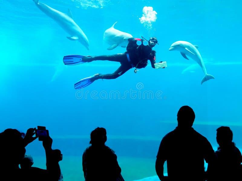 Okrętu podwodnego cleaning skąpania delfinów akwarium genua Włochy obraz royalty free